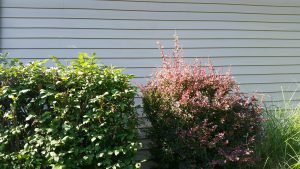 How To Clean Mildew Off Vinyl Siding Outdoor Room Ideas
