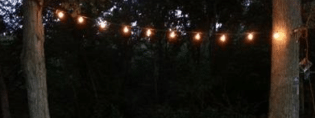 Edison lights hanging from trees