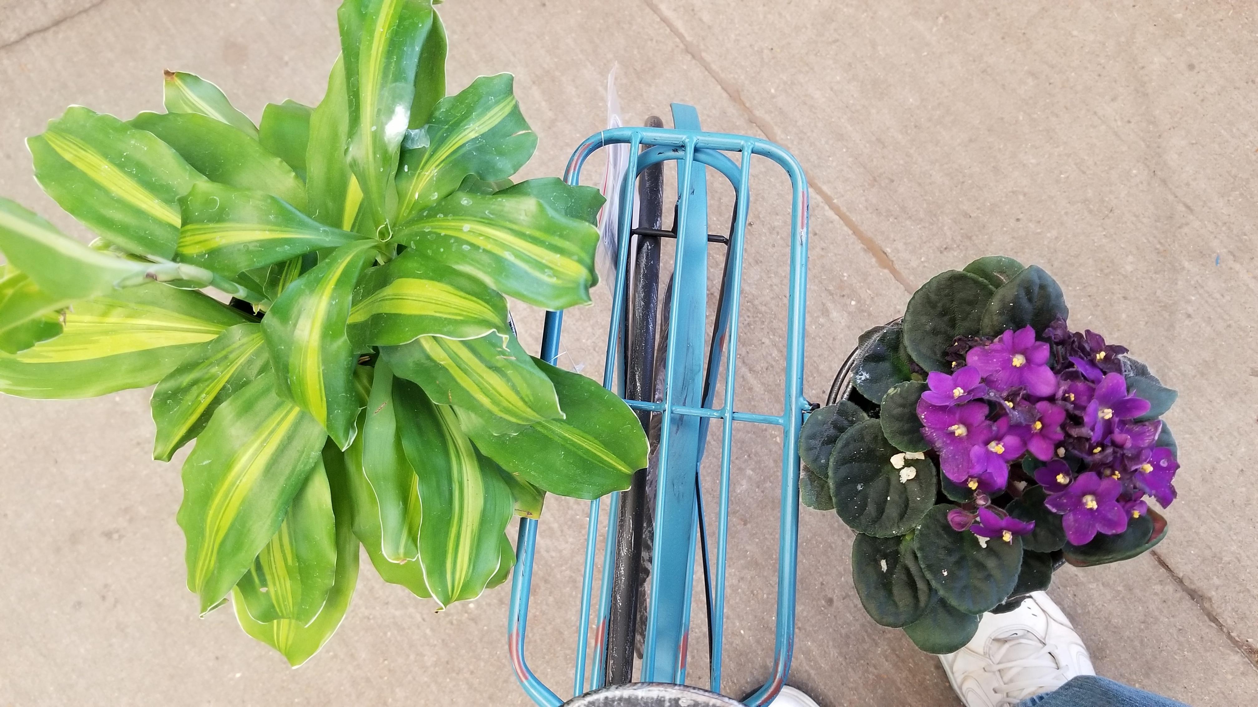Plants in pots on the back of garden bike