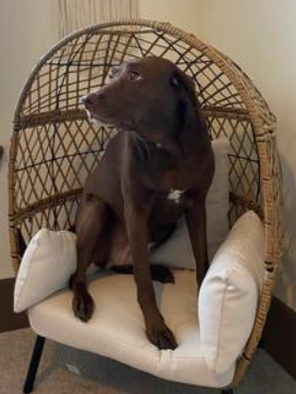 Kids Egg Chair-Ventura chair with dogs love too